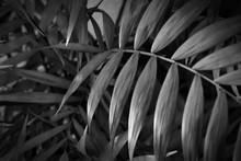 Tropical Leaves Close Up. Flor...