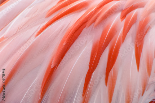 Natural and exotic pink flamingo feathers background texture