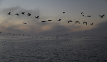 Birds Flying Over Stormy Lake