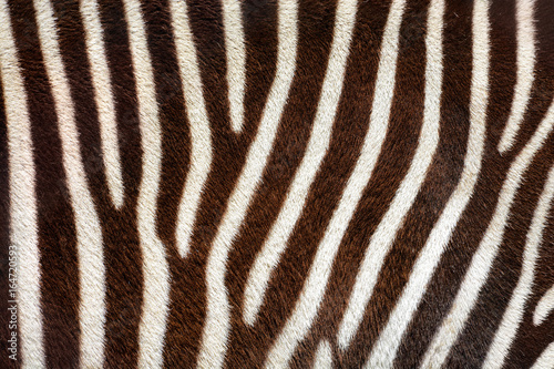 Poster Zebra Real zebra stripes background texture from a living animal