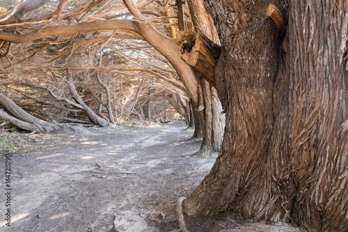 Foto  Cypress Grove Tunnel