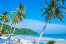 Tropical Paradise Beach With P...