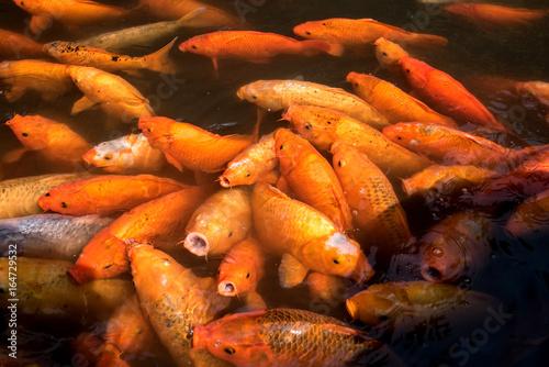 Photo  Yuyuan Garden Fish