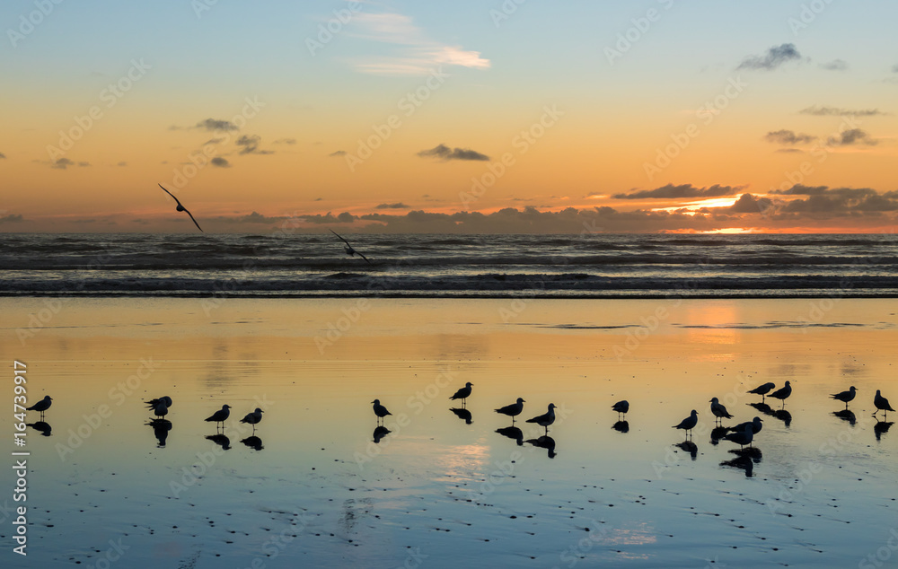 Birds of Foxton Beach