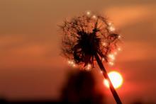 Sunlight Sparkles On The Seeds...