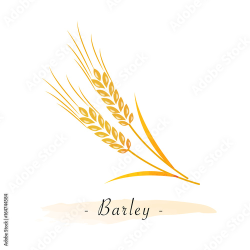 Colorful watercolor texture vector healthy vegetable barley Canvas Print