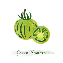 Colorful Watercolor Texture Vector Healthy Vegetable Zebra Green Tomato