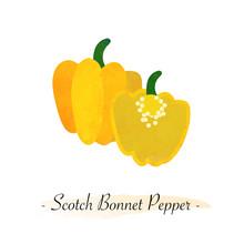 Colorful Watercolor Texture Vector Healthy Vegetable Yellow Scotch Bonnet Pepper