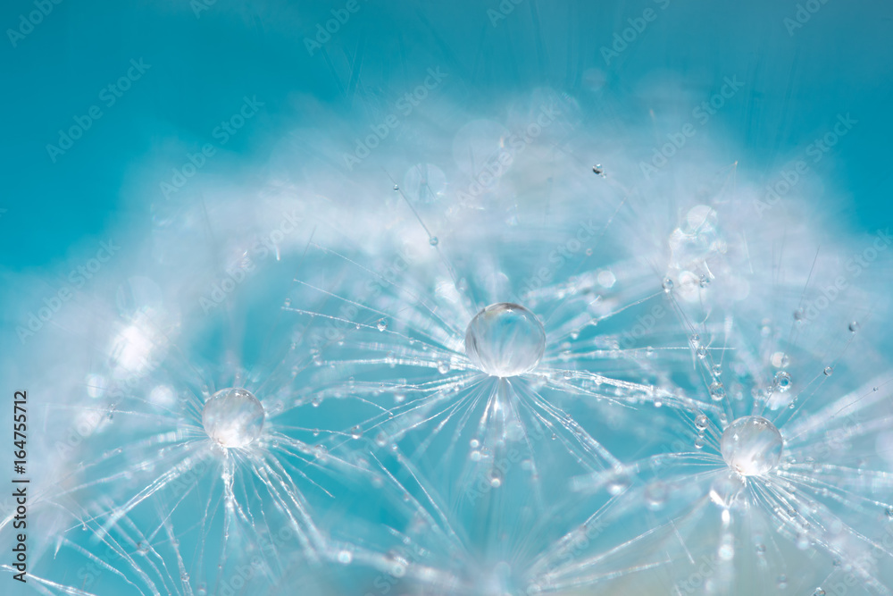 Fototapety, obrazy: Macro of a dandelion with droplets on the delicate blue background. selective focus.