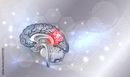 Human brain problems light grey glowing background beautiful bright human brain problems light grey glowing background beautiful bright illustration detailed anatomy ccuart Choice Image