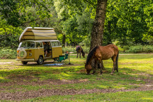 New Forset Camper Holiday