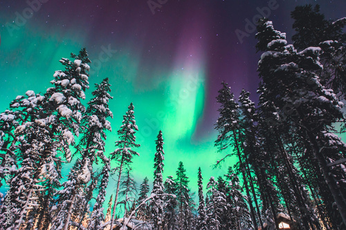 Foto auf Gartenposter Nordlicht Beautiful picture of massive multicoloured green vibrant Aurora Borealis, Aurora Polaris, also know as Northern Lights in the night sky over winter Lapland, Norway, Scandinavia