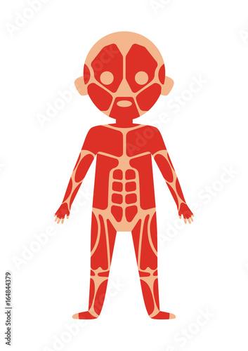 Boy body anatomy with muscular system. Health medical icon, internal ...