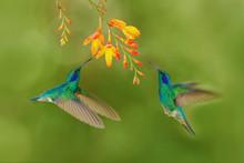 Two Bird With Orange Flower. G...
