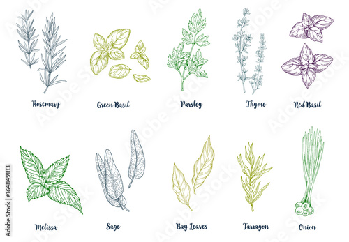 Set of colored hand drawn culinary herbs and spices Canvas Print