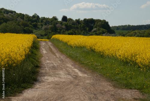 Feldweg im Sommer #164881952
