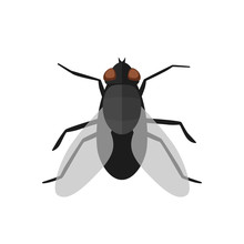 Fly Icon In Flat Style