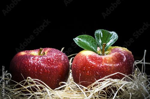 jablka-w-stogu-siana-na-ciemnym-tle