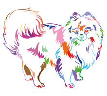 Decorative Standing Portrait Of Dog Pomeranian (Spitz) Vector Illustration In Rainbow Colors