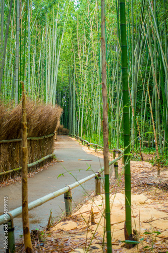 Papiers peints Bambou Path to bamboo forest, Arashiyama, Kyoto, Japan