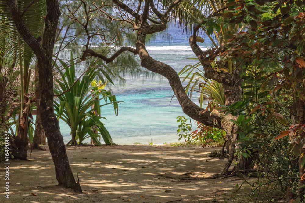 Fototapety, obrazy: Path to the beach through lush tropical vegetation - Efate Island, Vanuatu