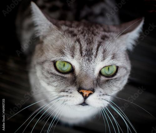 Fototapety, obrazy: cat