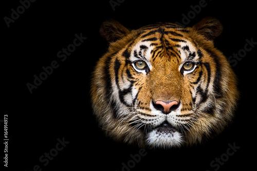 In de dag Tijger Close up tiger.