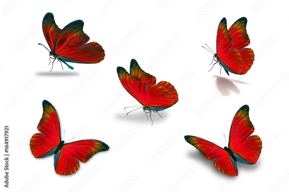 fifth red butterfly