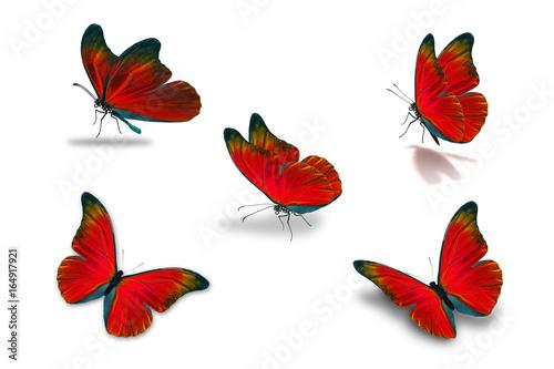 Fototapeta  fifth red butterfly