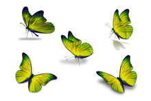 Fifth Yellow Butterfly