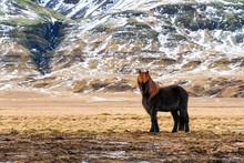 Beautiful Image Of An Icelandi...