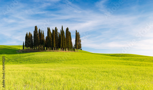 Poster Bleu SAN QUIRICO D'ORCIA, TUSCANY ITALY with rolling hills and tuscan cypress trees. Located in Val D'Orcia countryside.