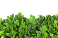 Parsley Bunch On White Background