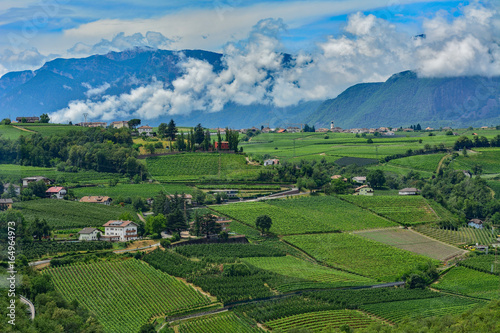 Italy South Tyrol Bozen vineyards - Buy this stock photo and