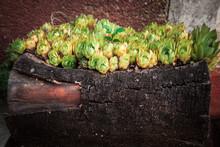 Green Flowers In Stump