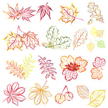 Autumn Leaves. Set Of Hand Drawn Stylized Vector Brush Sketches.