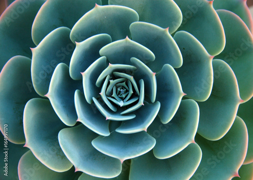 Photo Aloe Succulent Plant