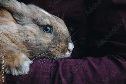 Photo adorable lopsided bunny in hands