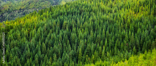 Wall Murals Forest Aerial view of green tropical pine forest panorama