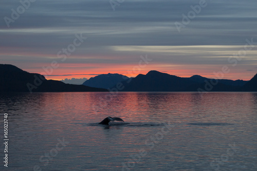 Photo  Humpback whale fluke at sunset