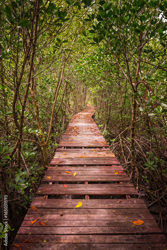 Tree tunnel, Wooden Bridge In Mangrove Forest at Laem Phak Bia, Phetchaburi, Thailand