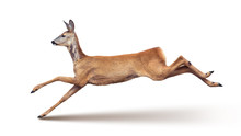 Jump Of The Roe Deer (with Sha...