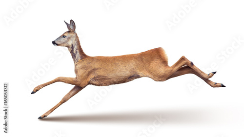 Fotobehang Hert Jump of the Roe Deer (with shadow) isolated on white.