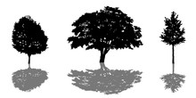 Tree Silhouette Icon Set With ...
