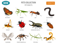Pet Insects Breeds Icon Set Flat Style Isolated On White. House Keeping Bugs, Beetles, Sticks, Spiders And Other Collection. Create Own Infographic About Pets
