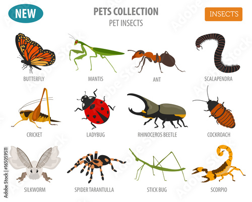Fotografia Pet insects breeds icon set flat style isolated on white