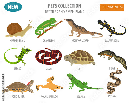 Slika na platnu Pet reptiles and amphibians icon set flat style isolated on white