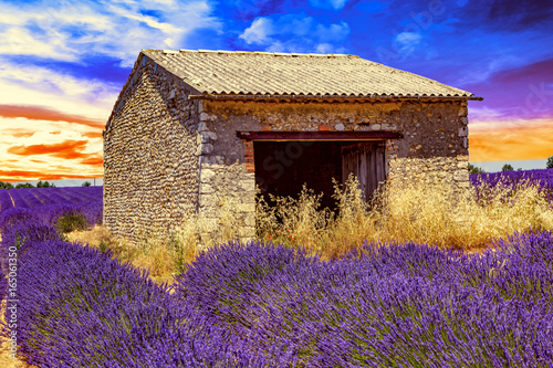 Poster Prune Lavender field with old ruins