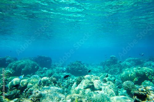 Canvas Prints Textures underwater scene with copy space