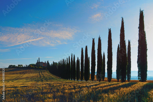 Poster Olive Tuscany is a beautiful, very photogenic landscape in central Italy
